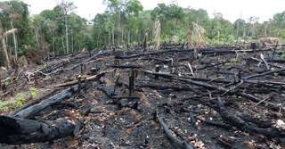 Déforestation en Amazonie : + 29 % en un an