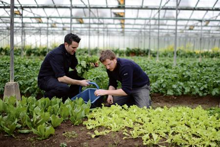 Cultiver des choux stefan - Choux de bruxelles plantation ...