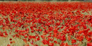 Allergies au pollen : la France en alerte rouge