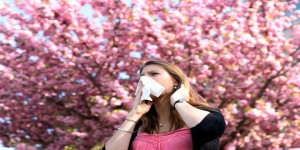 Allergies : attention au retour des pollens