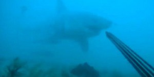 VIDEO. Etats-Unis : un plongeur se filme attaqué par un grand requin blanc