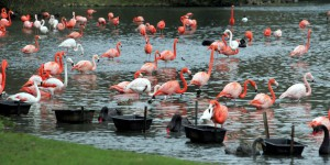 Haute-Corse : six flamants roses retrouvés morts, criblés de plombs