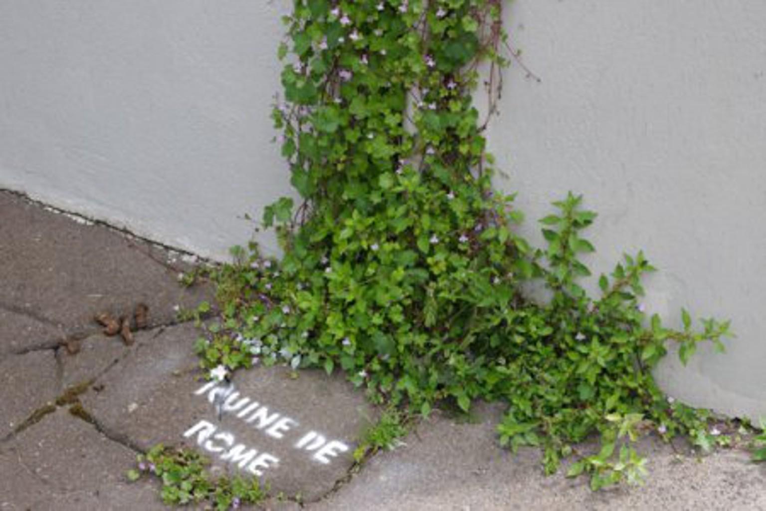 Bonne nouvelle la rue est elles les plantes sauvages for Recherche sur les plantes