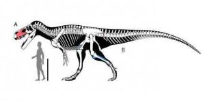 Le plus grand oiseau volant de tous les temps identifi - Dinosaure marin carnivore ...