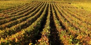un viticulteur refuse de traiter aux pesticides il encourt 30 000 euros d 39 amende et 6 mois de. Black Bedroom Furniture Sets. Home Design Ideas