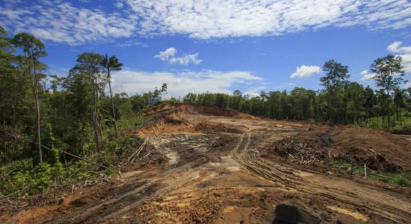 Le s nat abandonne le projet de taxe sur l huile de palme - Projet taxe proprietaire ...