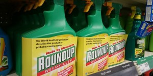 Glyphosate: pas d'accord sur son avenir en Europe!