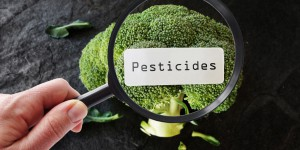L'Europe consulte sur les pesticides