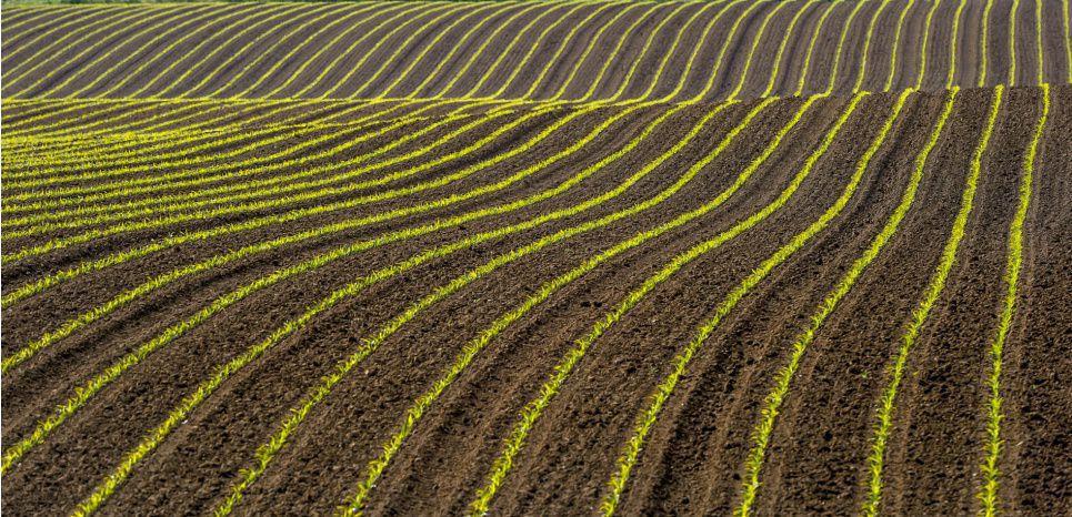 lagriculture-biologique-resiste-lagriculture-industrielle-6iwn.jpg